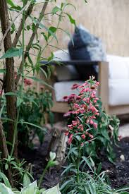Garden Planning 101 My Mother Before U0026 After A 3 000 Garden Makeover For Brooklyn Designer
