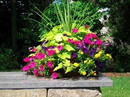 incredible wonderful container gardening ideas ideas for container