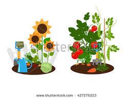 vegetable garden vegetables beds garden tools stock vector