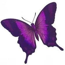pink butterfly designs cool blue purple butterfly design