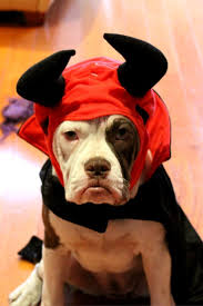 ginger halloween costume ideas 17 best dog halloween costumes images on pinterest cutest dogs