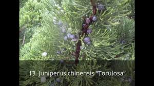 Garden Tree Types - types of garden plants and trees with pictures youtube
