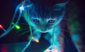 Hello Kitty Christmas Lights by Cat Christmas Lights Imgur