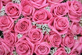 group of pink roses and white gypsophila detail of wedding flower