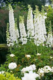 101 best sissinghurst white garden images on pinterest white