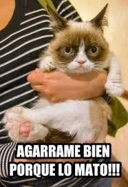Memes In Spanish - cat memes in spanish