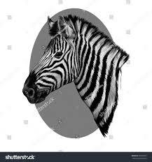 zebra head profile sketch vector grey stock vector 585596093