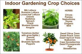Indoor Herbal Garden 13 Best Indoor Plants Images On Pinterest Indoor Plants Plants