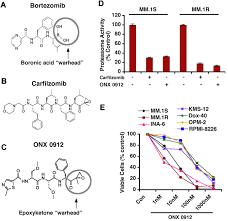a novel orally active proteasome inhibitor onx 0912 triggers in