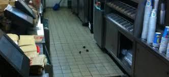 souris dans la cuisine vidéo le de belleville envahi par des souris welovebuzz