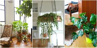 home plants best indoor plants good inside plants for small space gardening