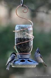 Backyard Birds Store by 25 Best For The Birds Images On Pinterest For The Birds Bird