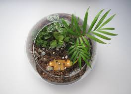 teeny tiny terrariums sheridan nursuries blog