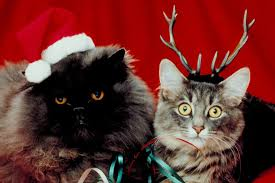 cat christmas pictures of cats in costume for christmas popsugar pets
