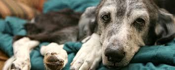 dog euthanasia euthanasia cremation services hawaiian humane society