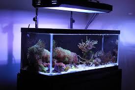 30 gallon tall aquarium dimensions aquarium design ideas