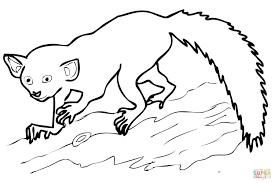 aye aye madagascar lemur coloring page free printable coloring pages