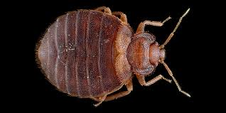 How To Check For Bed Bugs At Hotel How To Search Your Hotel Room For Bed Bugs Wired