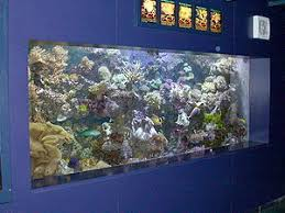 Reef Aquarium Lighting Marine Aquarium Wikipedia