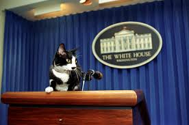 Oval Office Through The Years United States Presidential Pets Wikipedia