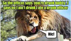 Meme Pictures With Captions - animal capshunz funny animal pictures with captions animal