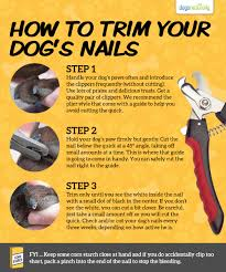 a stress free way for trimming your dog u0027s toenails