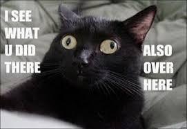 Best Animal Memes - wacky animal memes gallery ebaum s world