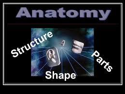 Human Anatomy And Physiology Chapter 1 Human Anatomy And Physiology Chapter 1 The Human Body An
