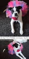 diy dog halloween costume best 20 dog tutu ideas on pinterest pink dog diy dog costumes