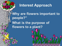 examining flowers and fruits ppt
