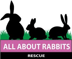 rabbits rescue