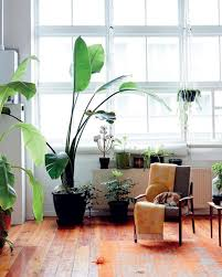 Modern Houseplants by How To Keep Your Indoor Plants Alive The Everygirl
