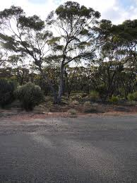 field guide to the native plants of sydney road trip from perth to sydney across the nullarbor plain padaek