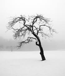 bare tree in winter royalty free stock image image 10654526