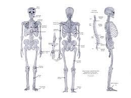 Anatomy Of Human Body Bones Pictures Of Human Body Bones Skeletal System Anatomy Chart Body