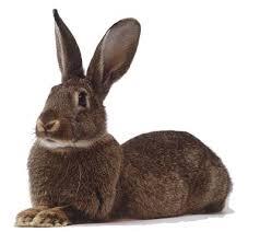 cuisiner un lapin rédiger ou cuisiner c est la même chose c est réduire boileau