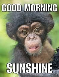 Good Morning Funny Meme - good morning animals pinterest animal animal humour and