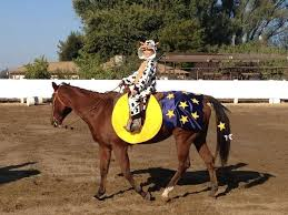 Horse Rider Halloween Costume 19 Costumes Horse Rider Images Horses