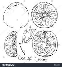 set orange line drawn on white stock vector 277920512 shutterstock