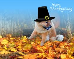 happy thanksgiving wallpaper impremedia net