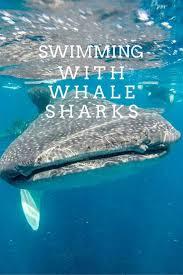 best 25 whale sharks ideas on pinterest marine animals list