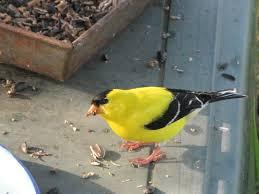 must see birds july u2013 prairie birder