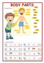 english exercises parts of the body