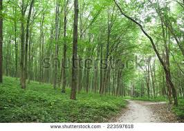 beautiful green forest summer stock photo 125444354