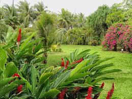 Tropische Pflanzen Im Garten Mediterrane Und Tropische Pflanzen Für Den Garten Garten Welt Wissen