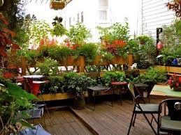 terrace gardening small terrace garden the lovely plants