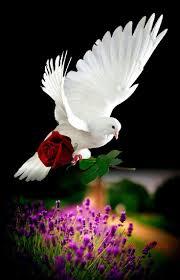 Caribbean Tan Hutchinson Ks 1823 Best Pássaros Seres Maravilhosos Images On Pinterest