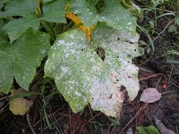 Types Of Plant Disease - plant disease control eden u0027s garden