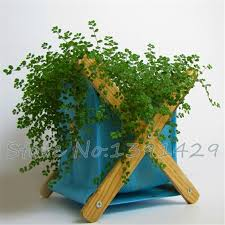 fast growing climbing plants promotion shop for promotional fast