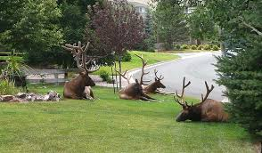 cool lawn ornaments for my yard helena montana